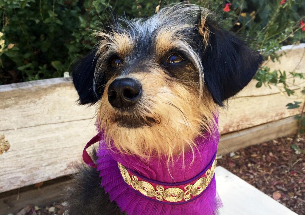 Lisa's dog - Indie Acupuncture